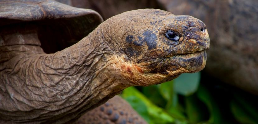 4 ways to explore the Galapagos